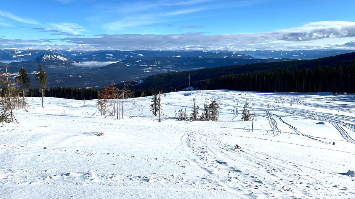 New logging has created open riding on the VSA trails north of Silver Star Park