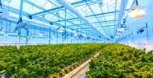 Marijuana Facility Regulation