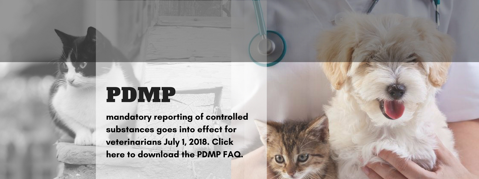 Click to view and download the FAQ about the PDMP.